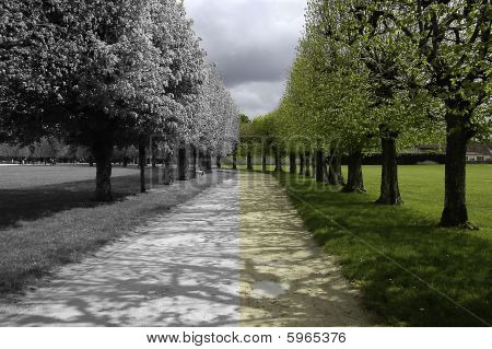 Footpath in the forest. Half coloured and half black & white picture poster