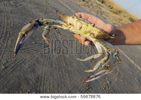 Crab Held By Hand