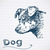 Sketch of dog muzzle Vector poster
