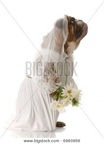 Dog Dressed Up As A Bride