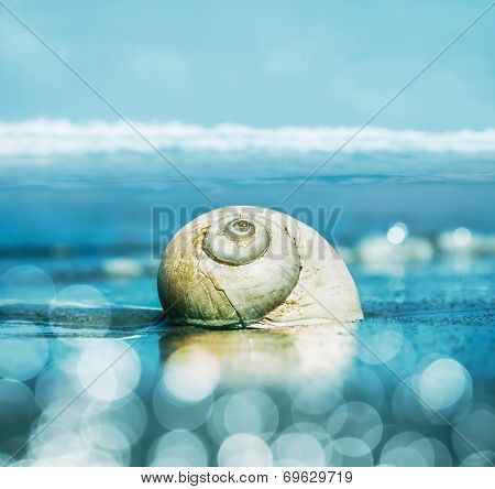 Moon Snail And Bokeh