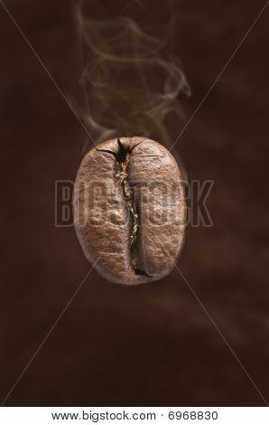 Coffee Bean Fresh Roasted