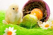 Easter chick concept, all arange on green. Studio shot, poster