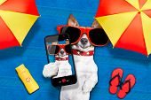 dog lying on towel under shade of umbrella relaxing and chilling out in the summer vacation taking a selfie poster