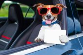 dog leaning out the car window showing a blank and empty drivers license poster