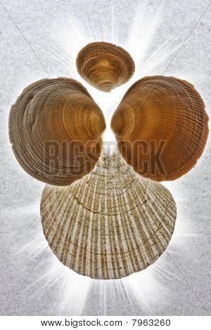 Angelic shells