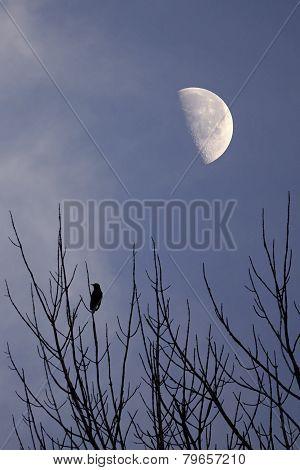 Solitary Bird Waiting