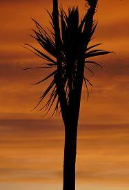Palm tree silhouette sunset