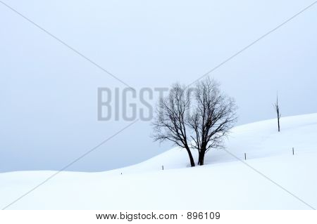 Overcast Winter Landscape