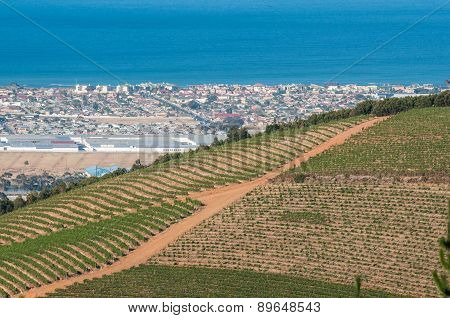 Vineyards With Somerset West And Gordons Bay In The Back