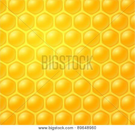 Honey Making In Honeycombs