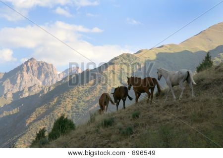 Herd Of Wild Horses In Twilight