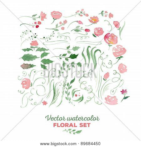 Floral set - vector watercolor illustration. Flowers, leaves, sw
