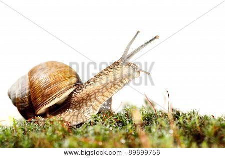 Snail Look