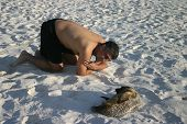 a man playing with a baby sea lion on the beach in the galapagos islands. poster