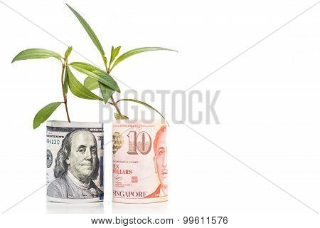 Concept Of Green Plant Grow On Usd Against Singapore Dollar Currency