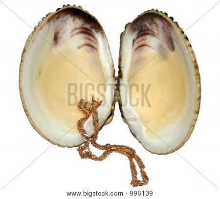 Chain In A Shell