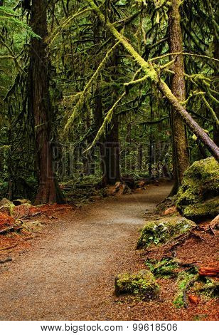 Enchanted pathway into a Pacific Northwest Rain Forest