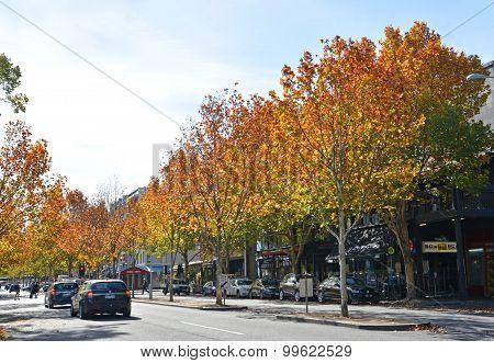 Autumn In Lygon Street, Melbourne
