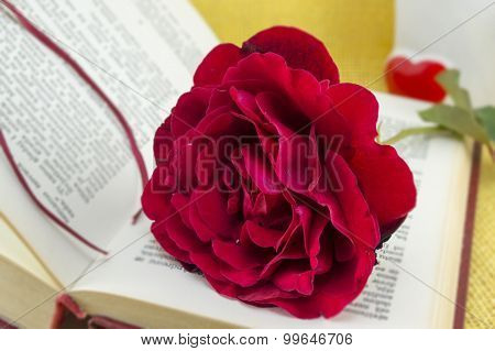 Romantic red rose on a open book with blurred content