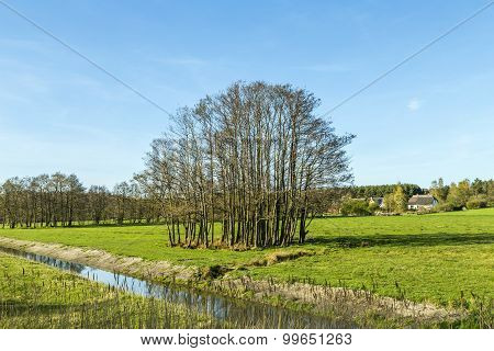 Rural Landscape With Fields And Trees In Usedom