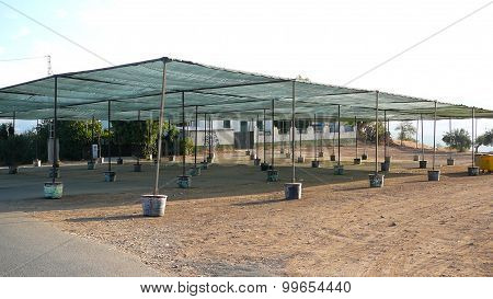 Shaded Feria Ground