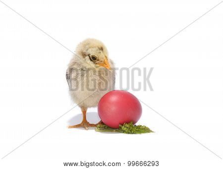 Chicken With Easter Eggs On White Background