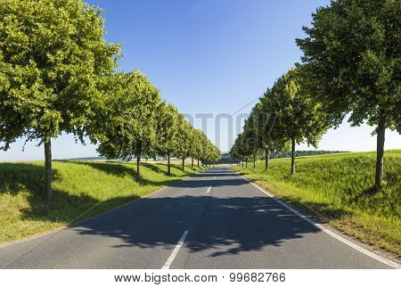 Country Road Running Through A Tree Alley