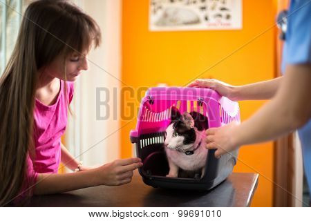 Scared sick cat in transporter with owner in vet ambulant