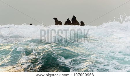 Seal Silhouette On The Rock