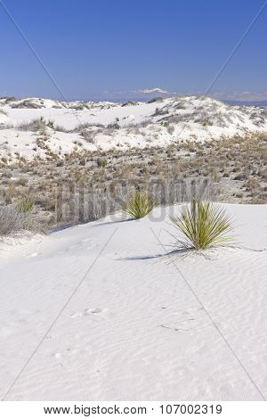 White Sands And Snowy Mountains