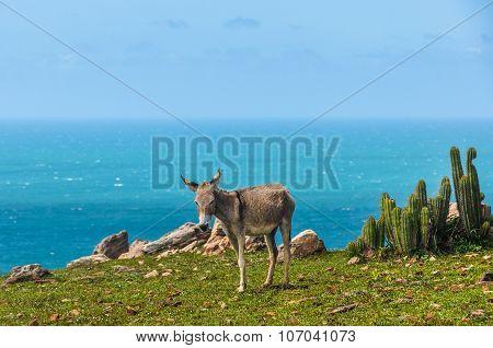 Donkeys In Jericoacoara, Brazil