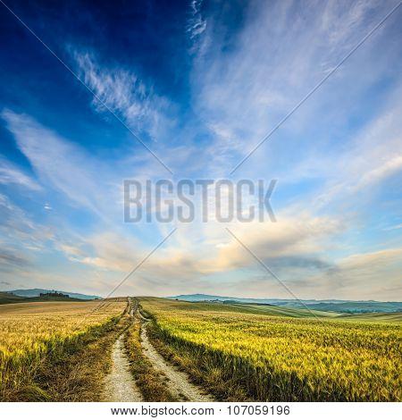 dirt road in wheaten field