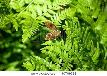Butterflies in the summer
