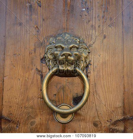 Antique door knob with lion's head on old wooden obsolete door, Rome, Italy