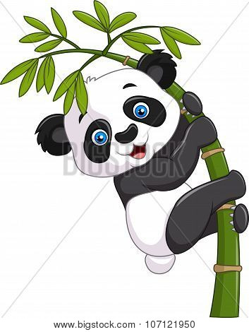 Cute funny baby panda hanging on a bamboo tree