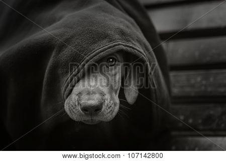 Homeless little puppy