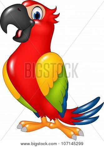 Cartoon funny parrot isolated on white background