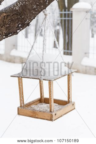 the winter-bird's of a feeding trough
