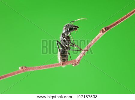 Ant Sit On Brunch