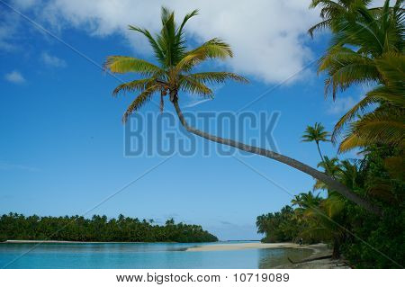 Palm Tree Leans Out Over Waters Edge On Tropical Island.