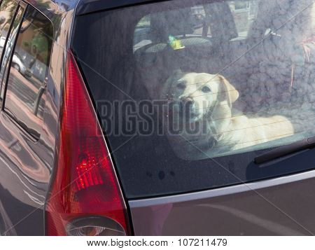 Clever Dog Locked In A Car