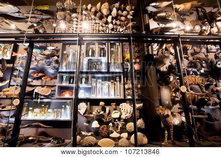 Installation with specimens of extinct animals and modern inMuseum fur Naturkunde