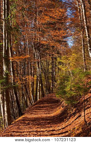 Woodland Path In Autumn - Trentino Italy