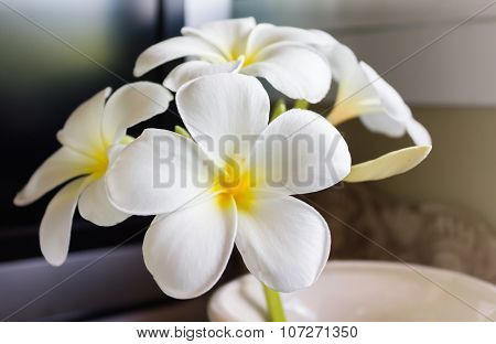White flower plumeria or frangipani in white vase easily decorated in the corner