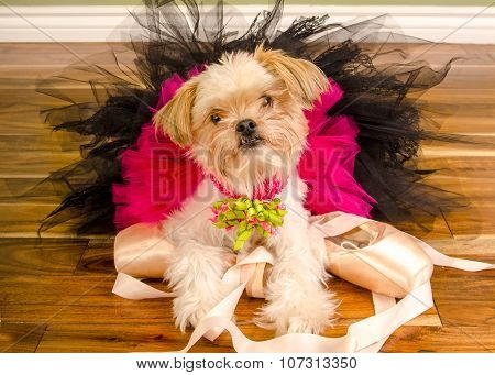 Ballerina Dog In Pink Tutu And Pointe Shoes