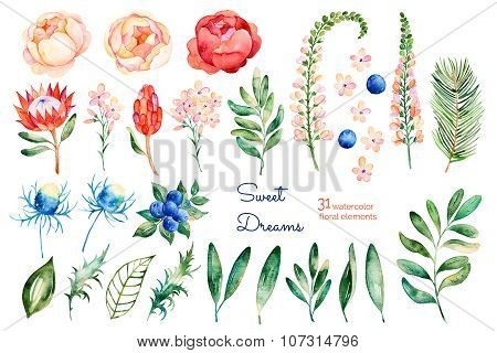 Colorful floral collection with roses,flowers,leaves,protea,blue berries,spruce branch,eryngium