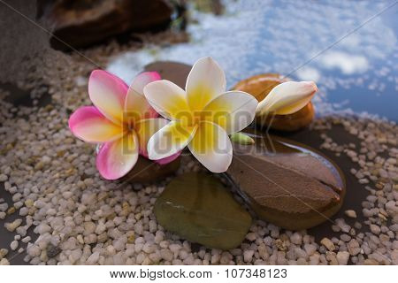plumeria or frangipani decorated on water and pebble rock in zen style for spa meditation mood