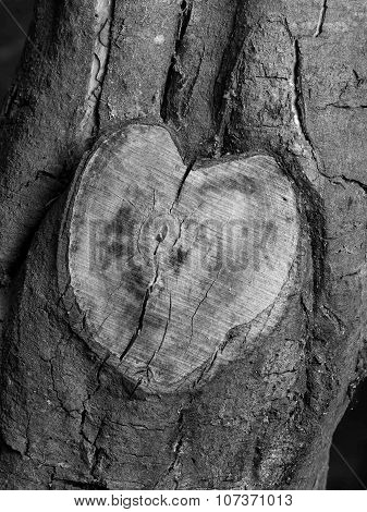Heart shaped tree branch cutoff in black and white