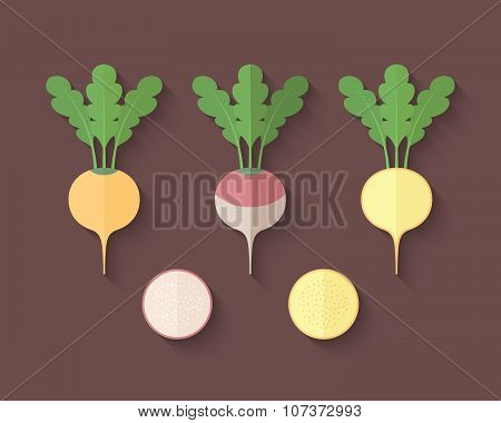 A Set Of Vegetables In A Flat Style - Turnip And Rutabaga